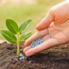 Какие удобрения нужны для клубники осенью?
