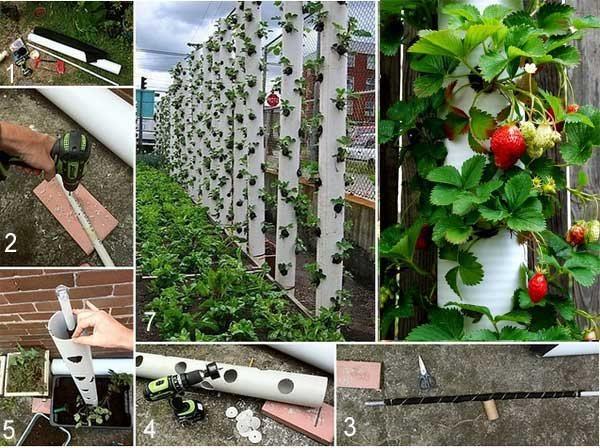 Садовые растения Купить саженцы растений для сада по
