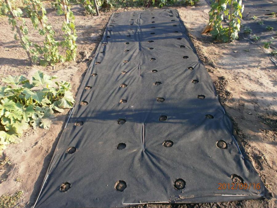 Ткань для посадки клубники