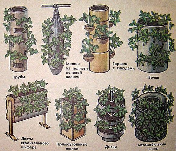 Схема посадки клубники весной