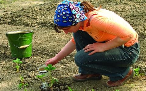 Удобрение для клубники при посадке весной